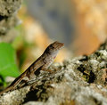 Lizard Stock Image - 11306681
