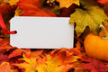 Fall Harvest Royalty Free Stock Photography - 11334927