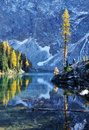 Blue Lake With Golden Larch Tree In Autumn Stock Image - 11338491