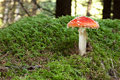 Fly Agaric Stock Photos - 11340693