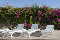 Lounges Standing Near The Flowering Bougainvillea Stock Image - 11340761