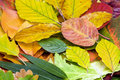 Many Different Autumn Leaves Stock Photos - 11357403