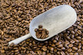 Coffee Beans And Scoop Stock Photography - 11388452