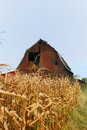 Old Red Barn With Corn Stalks Royalty Free Stock Images - 1142789