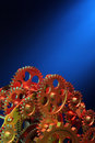 Part Of Gears. Stock Images - 11429894