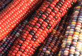 Indian Corn Stock Images - 11441874
