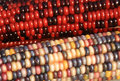 Indian Corn Stock Images - 11442134