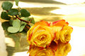 Yellow Roses Royalty Free Stock Photos - 11458828
