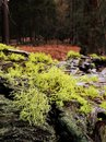Moss And Lichen On Bark Of Fallen Tree In Forest Royalty Free Stock Images - 114998229