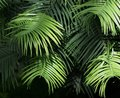 Green Leaves In Layers Stock Images - 115190934