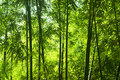 Bamboo Forest Stock Photography - 11521832