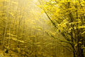 Two Layers Of Trees In An Autumn Royalty Free Stock Photo - 11529665