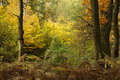 Autumn Forest Stock Images - 11602484