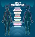 Body Meridian System Vector Illustration Scheme, Chinese Energy Acupuncture Therapy Diagram Chart. Royalty Free Stock Images - 116298729