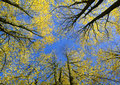 View Upwards In Autumn Forest Royalty Free Stock Images - 11640179