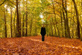 Alone In Autumn Forest Stock Photos - 11653353