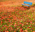 Bench Park Autumn Leaves Royalty Free Stock Photos - 11664818