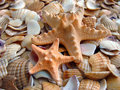 Starfishes Stock Images - 11676814