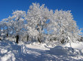 Frosted Trees Stock Photos - 11678813