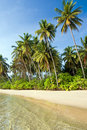 Island Tropical Shore Royalty Free Stock Photography - 11694657