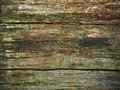 Rotten Wood Stock Images - 11697594