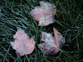 Frosty Leaves And Grass Stock Images - 1174584