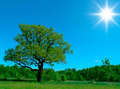 Single Tree Royalty Free Stock Images - 11703909