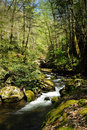 Slow Moving Creek Royalty Free Stock Image - 11728206