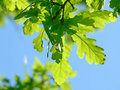 Fresh Leaves Stock Images - 11741694