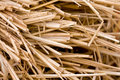 Straw Background Royalty Free Stock Photos - 11793038