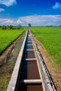 Irrigation Drain At A Paddy Field On A Sunny Day Stock Image - 11808171