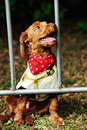 Little Dog Royalty Free Stock Images - 11820899