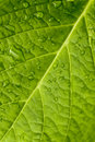 Macro In Leaf Royalty Free Stock Image - 11848516