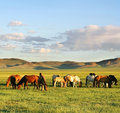 Herd Of Horses Stock Image - 11864381