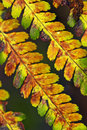 Old Fern Royalty Free Stock Photos - 11874468