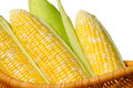 Ears Of Sweet Corn, Isolated Royalty Free Stock Photography - 11878917