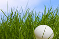 Table Tennis Ball Against Grass And Blue Sky Royalty Free Stock Photos - 11887878