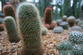 Cactus Stock Photo - 11955570