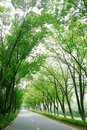 Tree Lined Road Royalty Free Stock Image - 11975686