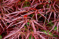 Red Fern Leaves Stock Images - 123864