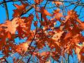 Brown Fall Leaves Stock Images - 124804