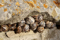 Periwinkles Royalty Free Stock Photography - 1203597