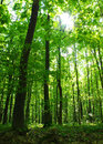 Forest Stock Images - 12023654