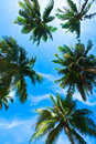 Coconut Palm Heads On Blue Sky Royalty Free Stock Photos - 12050478