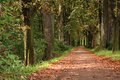 Forest Way Royalty Free Stock Photo - 1218365