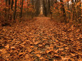 Autumn Path Across The Wood Royalty Free Stock Photo - 12115145