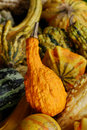 Gourds Stock Photo - 12138540