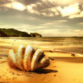 Golden Beach Royalty Free Stock Images - 12163589