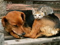 Cat And Dog Are Friends Who Is The Boss Royalty Free Stock Image - 1226816