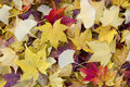 Fallen Leaves Stock Image - 1228071